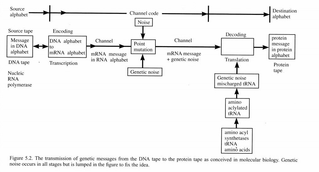 Hubert Yockey's DNA communication channel model. Notice that it contains the exact same components as Shannon's – the two systems are isomorphic. (From Hubert Yockey, Information Theory, Evolution, and the Origin of Life, Cambridge University Press, 2005.)