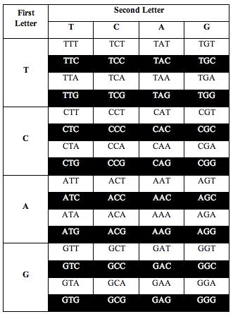 tcag_symmetry4